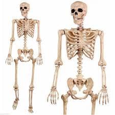Skeleton Halloween by 5 U0027 Pose N Stay Life Size Skeleton Halloween Decoration U2022 69 00