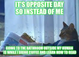 Cat Meme Boat - i should buy a boat cat meme imgflip