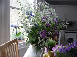 plants indoors showcasing flowers and plants indoors angela bunt creative