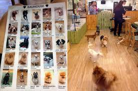 house dogs bau house dog café hongdae seoul south korea cute travels