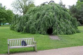 the tree at hyde park tree spirits