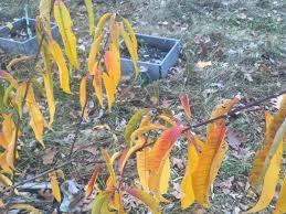 matt u0027s modest year in review general fruit growing growing fruit