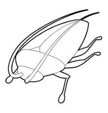 cockroach vector images 1 300