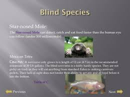 Mexican Blind Cave Fish Presentation Blindness