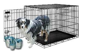 training a australian shepherd crate training your mini aussie puppy well c mini aussies