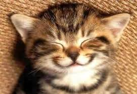 new easy ways to if your cat is happy angry animals happy