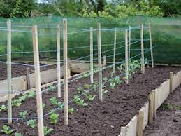 Vegetable Beds How To Use Raised Beds For Vegetable Gardening