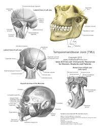 Visual Anatomy And Physiology Pdf Printable Free Anatomy Study Guides