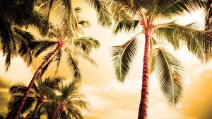 palm tree wallpaper 22003 1920x1080 px hdwallsource com