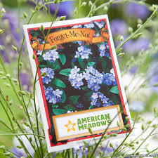 forget me not seed packets forget me not seed packet american