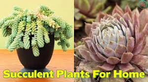 Succulents That Don T Need Light Top 10 Succulent Plants For The Home Youtube