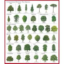 best 25 tree identification ideas on tree planting