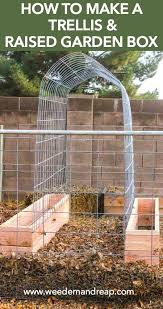 download picture of a trellis solidaria garden