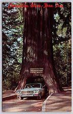 Chandelier Drive Through Tree Chandelier Tree Postcard Ebay