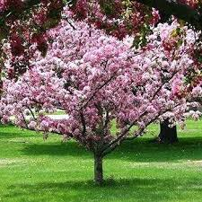 trees for landscaping flowering trees small ornamental trees