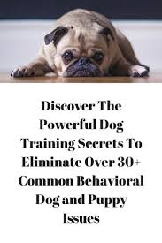 how to train dog to stop barking 163 best dogs images on pinterest baby dogs dog fighting and