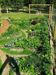 Kitchen Garden Designs Permaculture Garden Design Dream Gardens Pinterest