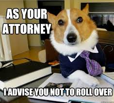 Lawyer Dog Meme - the best of the lawyer dog meme