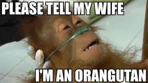 Internet Wife Meme - laughing vault funny pictures please tell my wife i m an orangutan