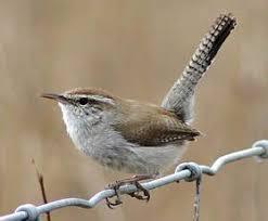 Backyard Wild Birds by 522 Best Birds Of Houston U0026 Texas Images On Pinterest Animals