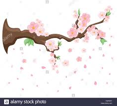 branch of pink blossoming japanese cherry tree vector