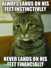 Thanksgiving Cat Meme - best of the depressed cat meme smosh