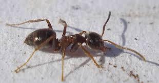 ameisen auf dem balkon ameisen vertreiben ohne gift 10 natürliche hausmittel für die