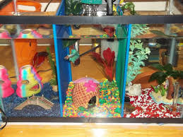 Betta Fish Decorations 35 Best Betta Tank Images On Pinterest Betta Tank Aquarium