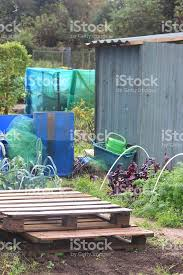 image of allotment vegetable garden plants waterbutts metalshed