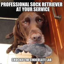 Meme Clean - awesome funny dog meme clean daily funny memes