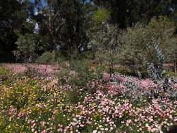 Kings Park Botanic Garden by Observations In An Undemocratic World Kings Park Wildflowers