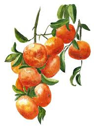 fruit wall art 8x10 a042 mandarin tree art print tangerine