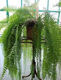 plante d駱olluante bureau plante couvre sol un tableau de couleurs naturelles dans votre