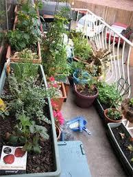 122 best balcony gardening images on pinterest plants balcony