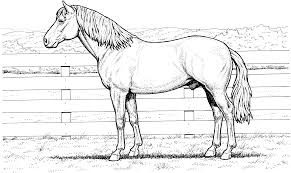 horse coloring pages for adults 8795