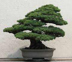 bonsai trees in japanese prints small is beautiful toshidama