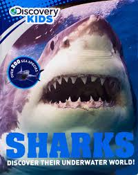 sharks discovery kids discovery sharks parragon books