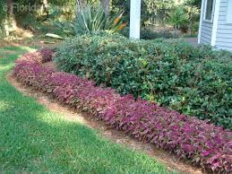 102 best florida friendly plants for your garden images on