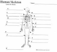 skeleton with labels choice image human anatomy image