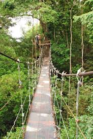 Treetop Canopy Tours by 9 Best Wattpad Images On Pinterest Reading Android And Book Quotes