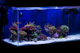 Reef Aquascape Designs Minimalist Aquascaping Reef Tools