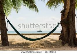 beach hammock hanging thick tree palm stock photo 567194659