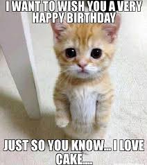 Funny Birthday Memes Tumblr - tumblr funny birthday cat funny pics story