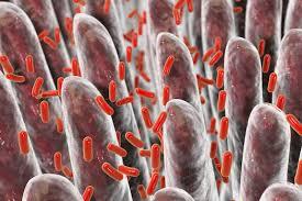 Memed Diagnostics - novel assay distinguished bacterial from viral infections md