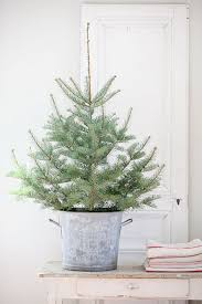 wellsuited real mini tree adorable best 25 live trees