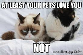 grumpy cat valentines at least your pets you not grumpy cat valentines quickmeme