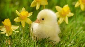 memories of spring ireland u0027s own