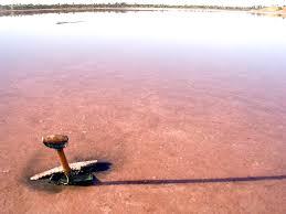 life in extreme environments acid saline lakes in australia
