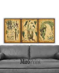 harry potter set of 3 prints mandrake mandragora print zoom