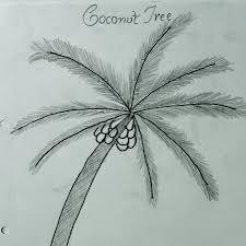 how to draw coconut tree क क नट प ड क स